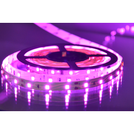 MLR-2835-60 pink LED traka 5m 12V 4,8W 60 LED/1m IP20 Mitea Lighting